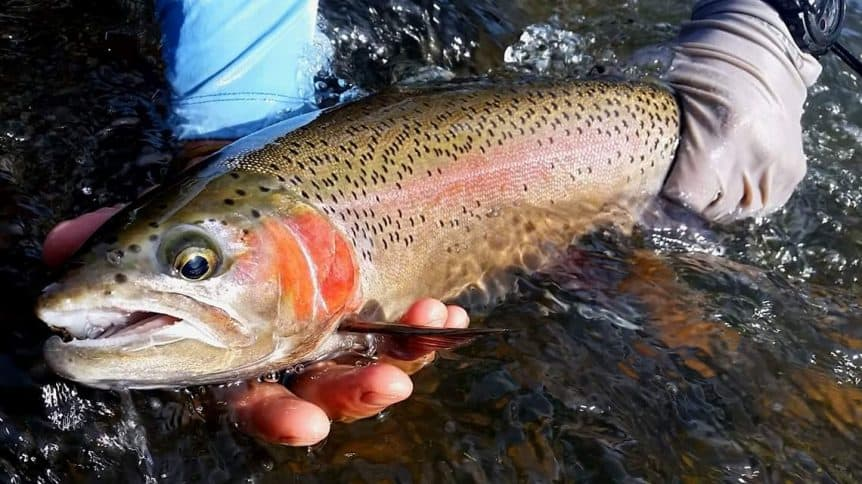 3 Basic Techniques To Catch More Trout