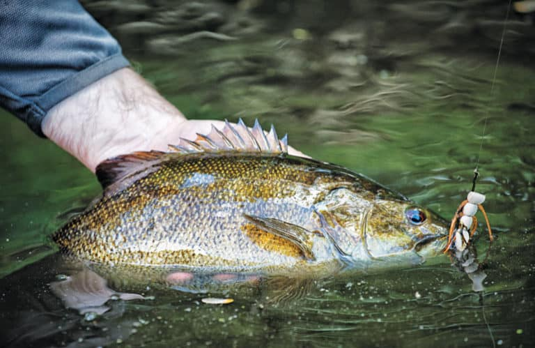 How to Catch Smallmouth Bass on Topwater Flies