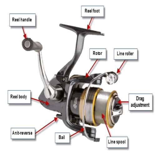 Parts of The Spinning Reel Explained  Ultimate Guide for Beginners